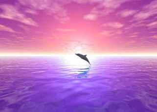 3d_dolphin_sky